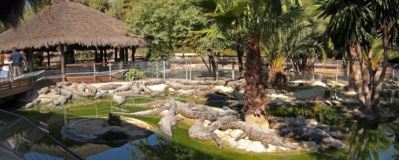 014 Torremolinos_-_Crocodile_Park