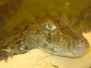 04 в парке крокодилов (фото мое)