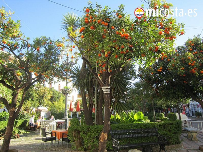 04 marbella patio de los naranjos