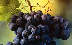 02 uvas andalucia